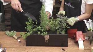 GardenWorks: Father's Day Planter