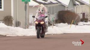 Motorcycling Easter bunny chased by kids and cops in Dieppe (01:59)