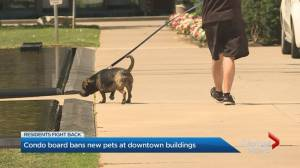 Condo board bans new pets at downtown building