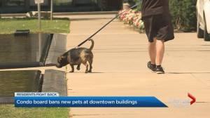 Condo board bans new pets at downtown building
