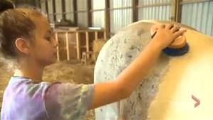 Farm program aims to help at-risk Ottawa youth gain job skills