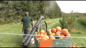 Buckhorn Pumpkin Festival underway