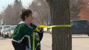 Residents of Humboldt place green and yellow ribbons on trees in support of Broncos