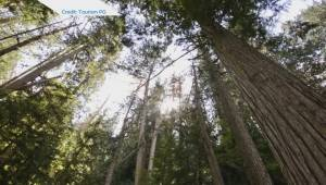 Ancient Forest near Prince George given additional protection by province