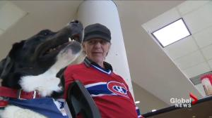 Therapy dog helping homeless at Montreal shelter