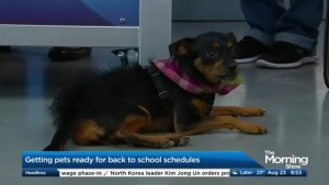 Preparing your pets for back to school