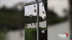 Crabs with 'real big claws' invade Florida man's home