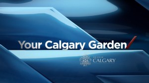 Your Calgary Garden: Jul 12