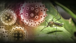 Zika virus spreads rapidly throughout Americas