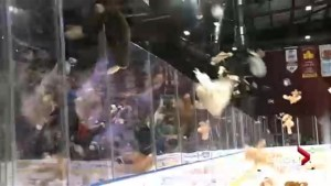 Who will score the teddy bear goal for the Lethbridge Hurricanes