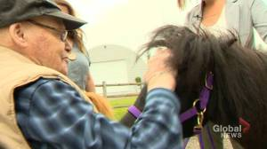 Warming up for the Calgary Stampede: Ranch hosts horse visits for seniors