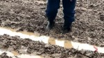 Soggy spring frustrates New Brunswick farmers
