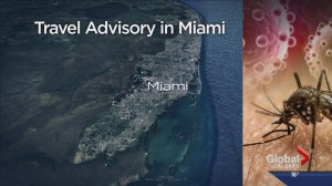Government of Canada issues travel warning for Miami neighborhood due to Zika virus