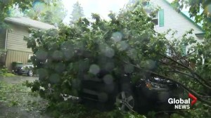 Raw video: Downed trees in Fredericton casing property damage