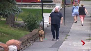 Zero tolerance for dog attacks': Montreal imposes strict