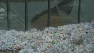 Vancouver Aquarium launches initiative to cut down on plastic pollution