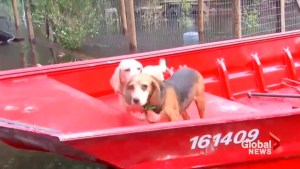 U.S. Coast Guard rescues dogs stranded in North Carolina flooding