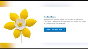 April marks Daffodil month for the Canadian Cancer Society