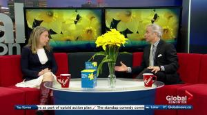 Canadian Cancer Society preparing for national daffodil campaign