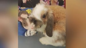 Popcorns and Binkies Rescue: Foster parents are needed
