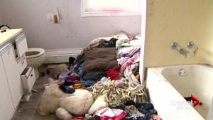 New Brunswick's social work system failed 5 children in Saint John neglect case: report