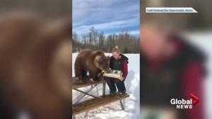 Discovery Wildlife Park celebrates Berkley the bear's birthday with ice cream cake