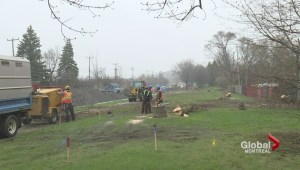 Pointe-Claire residents fight to save 75 trees