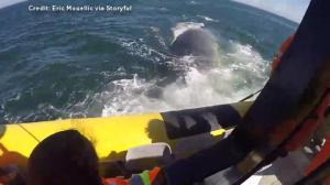 Whale watchers in Tadoussac get rare close-up of fin whale