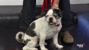 Adopt a pet: Meet Angus and Trudy from the Edmonton Humane Society