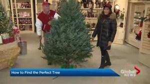 'Tis the season to cut down your own Christmas Tree