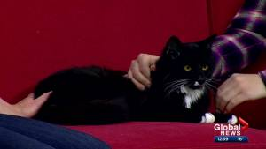 Calgary Animal Services Pet of the Week: Tito