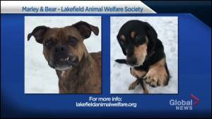 Global Peterborough Shelter Pet Project – Bear and Marley