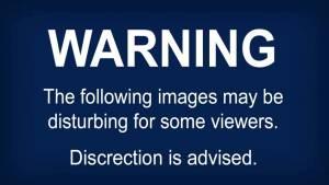 Disturbing images captured at Abbotsford pig farm