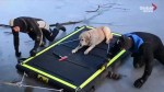 Firefighters rescue Labrador stuck in middle of frozen lake