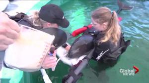 Vancouver Aquarium launches lawsuit against Park Board