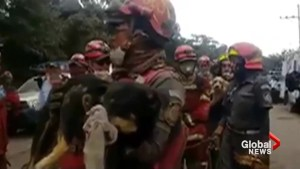 Firefighters rescue animals following eruption of Fuego volcano in Guatemala