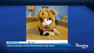 Cats allowed at Westminster dog show