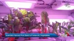 Scientists harvest first batch of Antarctic vegetables