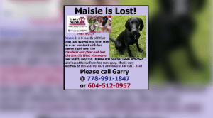 Longtime SAR volunteer searching for puppy who bolted after B.C. highway crash