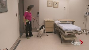 A bacteria-sniffing dog saving lives at B.C. hospitals