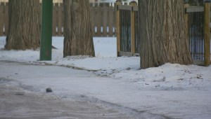 Sand is most pet-friendly way to add traction to icy sidewalks