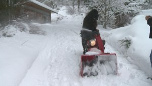 Watch Morgan the dog push a snowblower, fetch beer