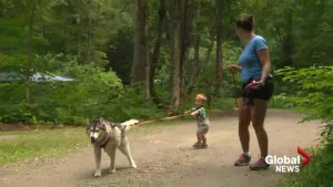 Pilot allowing canines in Quebec's provincial parks nears end