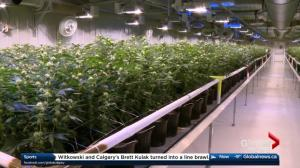 Alberta to introduce cannabis legislation Thursday