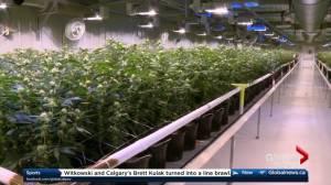 Alberta to introduce cannabis legislation Thursday