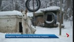 Ontario Couple accuses dog sledding operation of animal cruelty