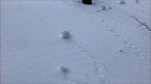 Video captures rare 'snow rolling' phenomenon