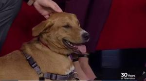 Adopt a Pet: Griffin looking for his new home