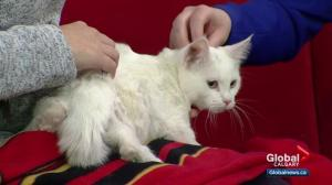 Pet of the Week: Neville
