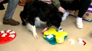 Calgary cold snap gets dogs trying indoor puzzles